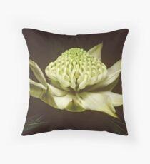 White waratah (Telopea speciosissima cv) Throw Pillow