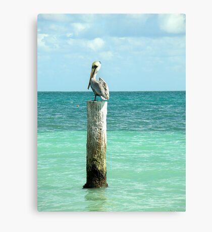 pelican post Canvas Print