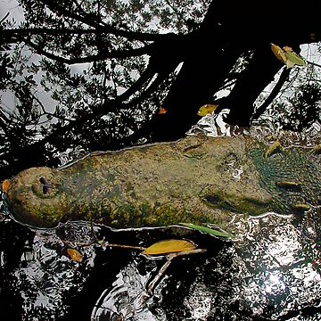 Muddy Waters by aguakina