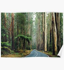 Black Spur, Yarra Ranges, Victoria. Poster