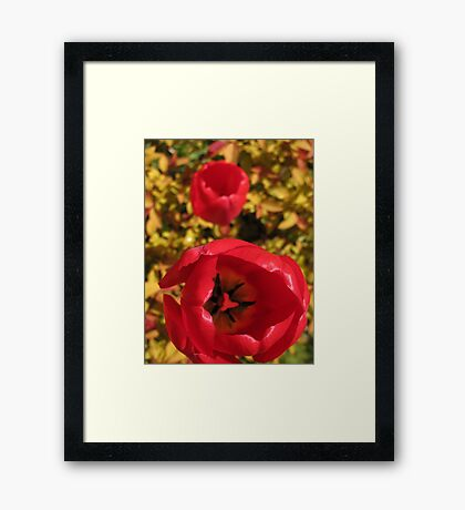Red and Yellow Framed Print