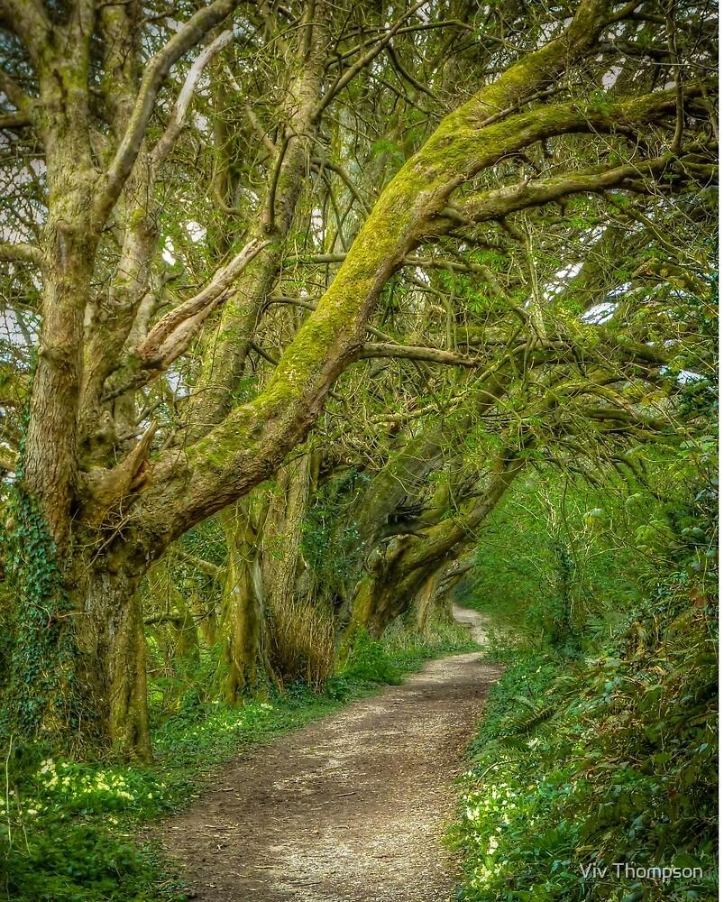 The Primrose Path by Viv Thompson