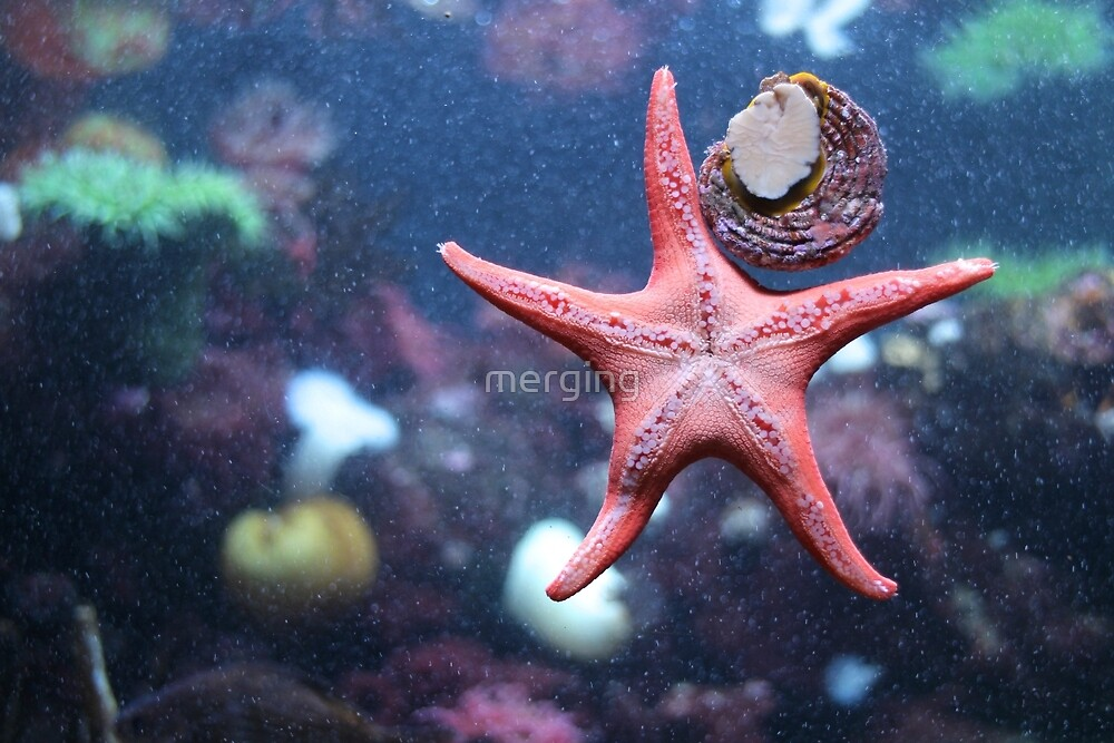 Starfish by merging