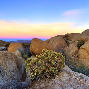 Sunset at Joshua Tree by shubat