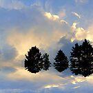 A New Day ! by Elfriede Fulda