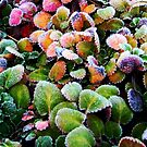 Frosty Colours by Alexander Mcrobbie-Munro