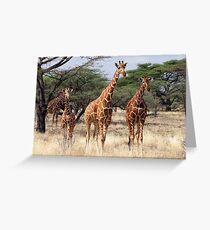 RETICULATED GIRAFFES - SAMBURU Greeting Card