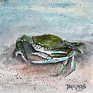 blue crab sea life by derekmccrea