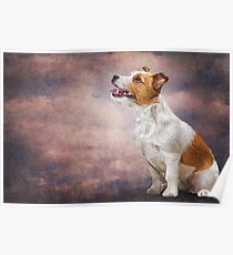 Jack Russell Terrier. Drawing, illustration funny dog Poster