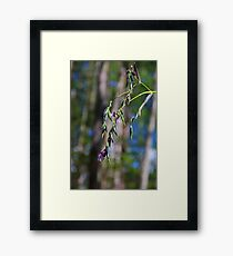 In Defiance of Winter Framed Print