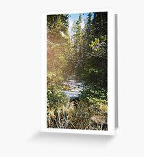 winter woodland Greeting Card
