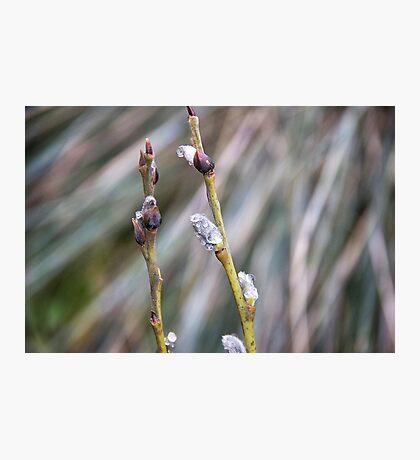 Rain pearls Photographic Print