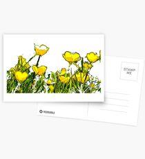 Buttercups  Postcards