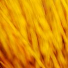 Yellow wicker branches by Patrick Morand