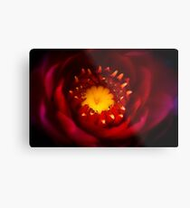 A Water Lily Welcome Metal Print