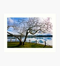hallowed tree by the sea Art Print