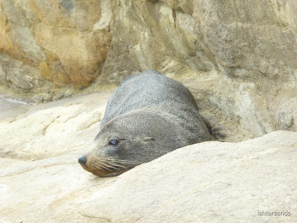 Seal New Zealand by ishtarsands