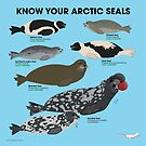 Know Your Arctic Seals by PepomintNarwhal