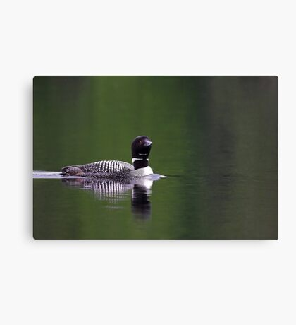 Lone Loon - Common Loon Canvas Print