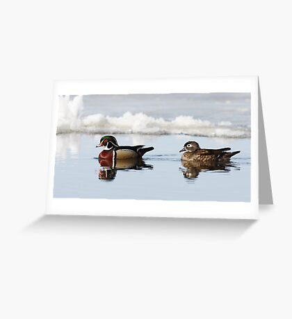Wood Ducks on river Greeting Card