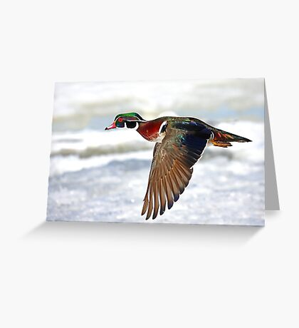 Colourful flight - Wood Duck Greeting Card