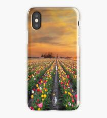 Sunset over colorful Tulip flower fields in full bloom during spring season tulip festival in Woodburn Oregon iPhone Case