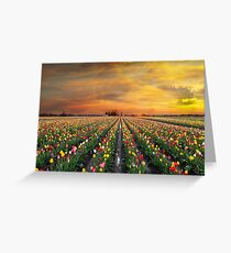 Sunset over colorful Tulip flower fields in full bloom during spring season tulip festival in Woodburn Oregon Greeting Card