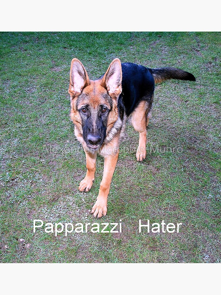 Papparazzi  Hater by Alexanderargyll