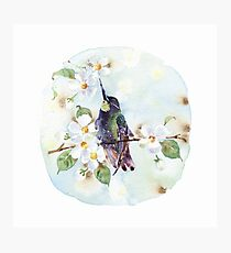 Watercolor | Hummingbird and Apple Blossom Photographic Print