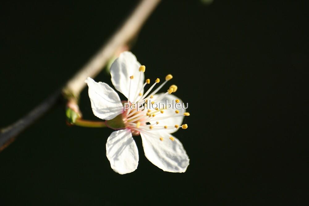 Mirabelle Blossom by Pamela Jayne Smith