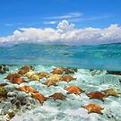 Seascape and starfish underwater by Dam - www.seaphotoart.com