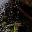 water by Stefan Trenker