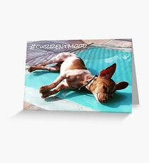 #currentmood - chilled out chihuahua Greeting Card