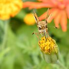 Insect and Flower Close-Up, Bronx, New York City by lenspiro