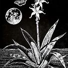 Night Blossoms Woodcut by Una Scott