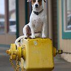 Honakaa Dog by IrishEyesMrsZ