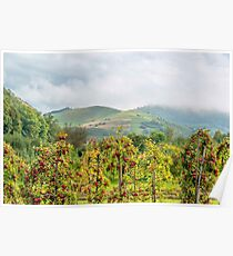 Apple harvest below Bad Berg, Kaiserstuhl, Germany Poster