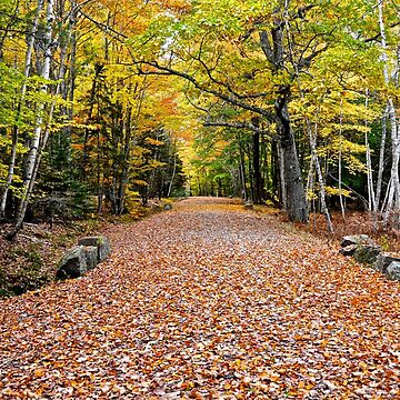 Carriage Road In Fall, Acadia NP, Maine by mdidrh