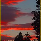 Sunset  and  Trees by Alexander Mcrobbie-Munro