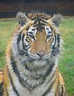 Bengal Tigress - Lily by Ginny York