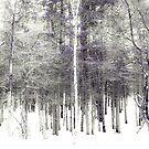 Tall Birches by Rachel Blumenthal