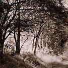 Cutting Lane  , Uralba  by Trish Threlfall