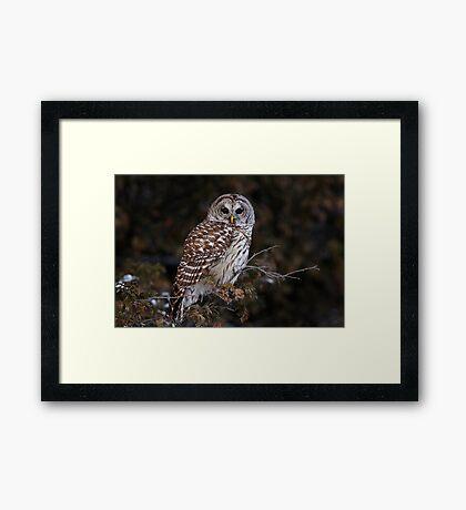 Barred Owl - Kanata Framed Print