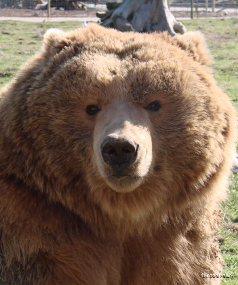 Kodiak Brown Bear by tkrosevear