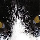 Daisy Sees U by cetstreasures