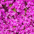 Purple by cetstreasures