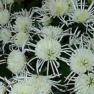 Beautiful Bloom3 by cetstreasures