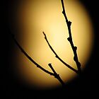 Eclipsed  Silhouette by lorilee