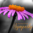 Prayers and Sympathy Purple Orange Coneflower by Shelley Neff