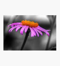 Lovely Purple and Orange Coneflower Echinacea Photographic Print